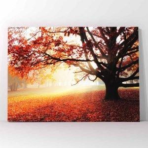 Autumn Forest πίνακας σε καμβά
