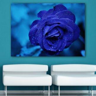 Πίνακας σε καμβά Blue Rose