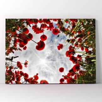 Πίνακας σε καμβά Poppies