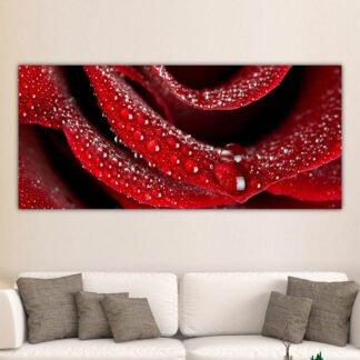 Δροσοσταλίδες σε κόκκινο τριαντάφυλλο πανοραμικός πίνακας σε καμβά