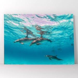 Πίνακας σε καμβά δελφίνια