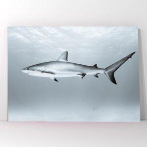 Πίνακας σε καμβά καρχαρίας
